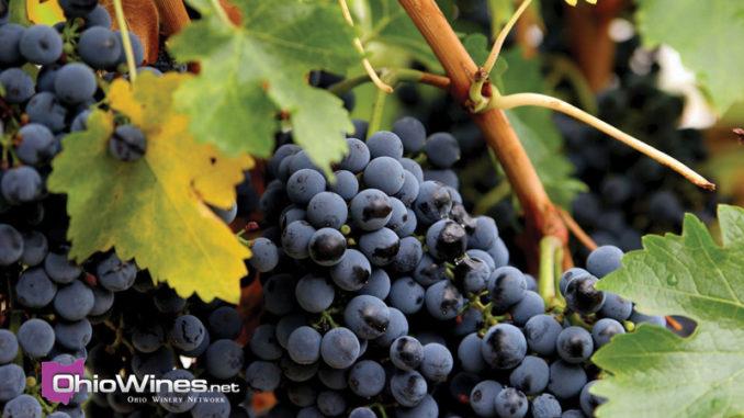 OhioWines.net - The Novice Winer Blog